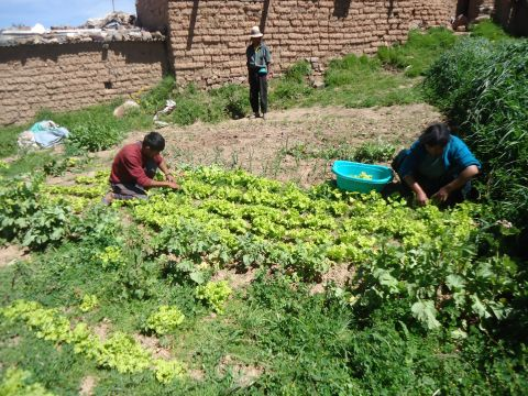 Strengthening the Management and Sustainable Management of common natural assets to reduce the risks of climate change for food security in Pocoata, Phase II